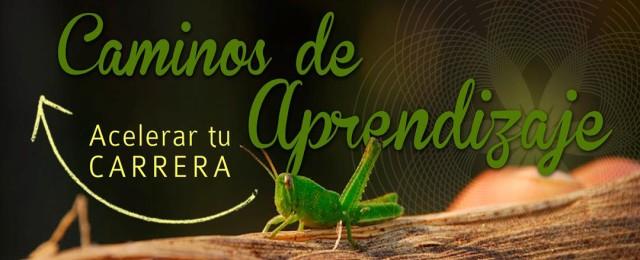 Aprendizaje Permacultura Chile El Manzano Cursos Educacion Sustentabilidad